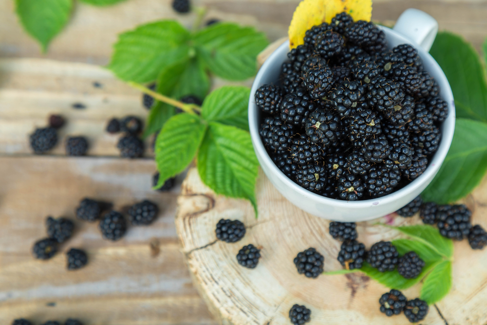 How To Grow Blackberries The English Garden