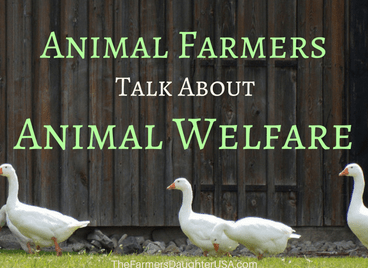 animal-welfare
