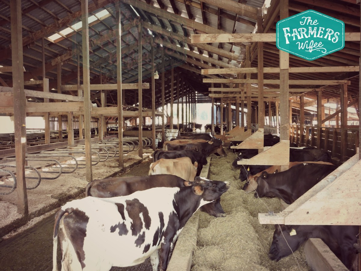 Dairy Farm Inspections