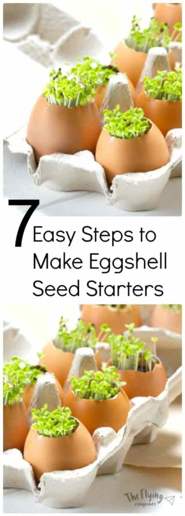 7 easy steps to make eggshell seed starters the flying for Gardening naturally coupon
