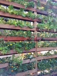 DIY Patio Privacy Screens | The Garden Glove