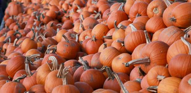 Pumpkins piled high