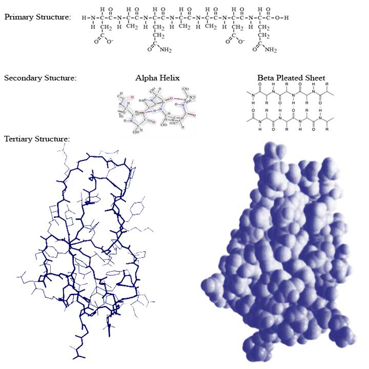 Protein Structure Diagram - #traffic-club