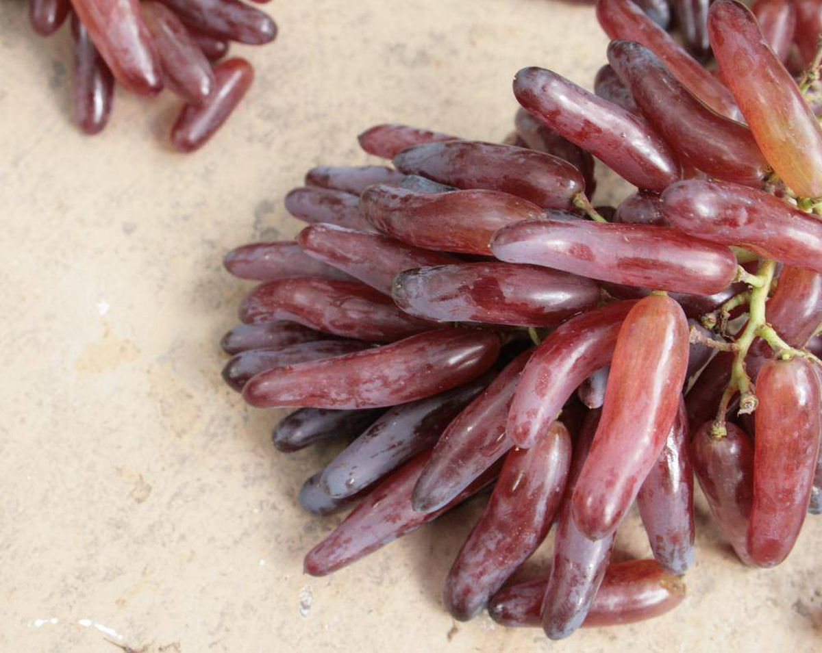 Hybrid Witch Finger Grapes For Curious Consumers The