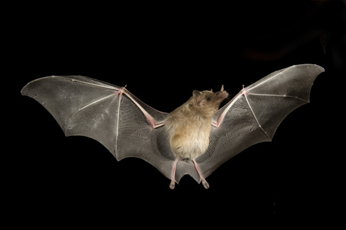 Fall Bird Feeder Wallpaper Fungus The Cause Behind Recent Erratic Bat Behavior In The