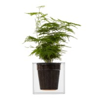 Boskke Clear Cube Self-Watering Planter - The Green Head