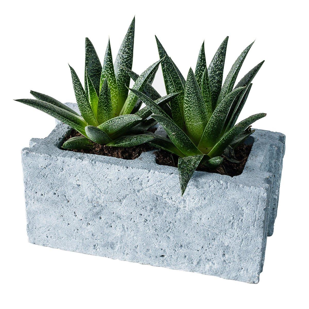 Cinder Block Cement Planter