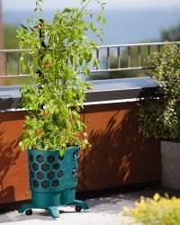 Gardener's Revolution - Self-Watering Tomato Planter With ...