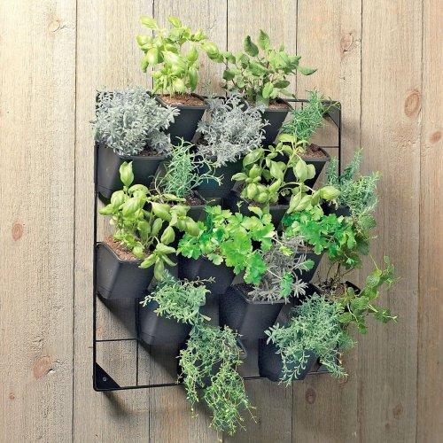 Medium Crop Of Vertical Wall Garden Plants