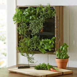 Small Crop Of Vertical Wall Herb Garden