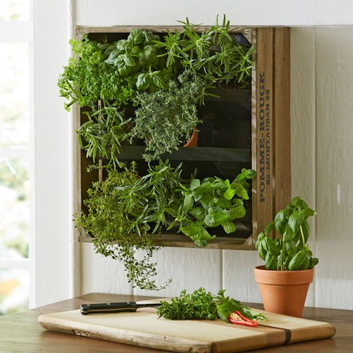 Medium Of Vertical Wall Herb Garden