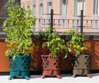 Gardener's Revolution - Self-Watering Tomato Planter With ...