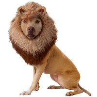 Lion Mane Dog Costume - The Green Head