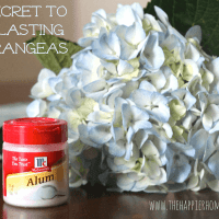 The Secret to Long-Lasting Hydrangeas