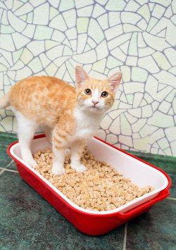 Small Of Coconut Cat Litter