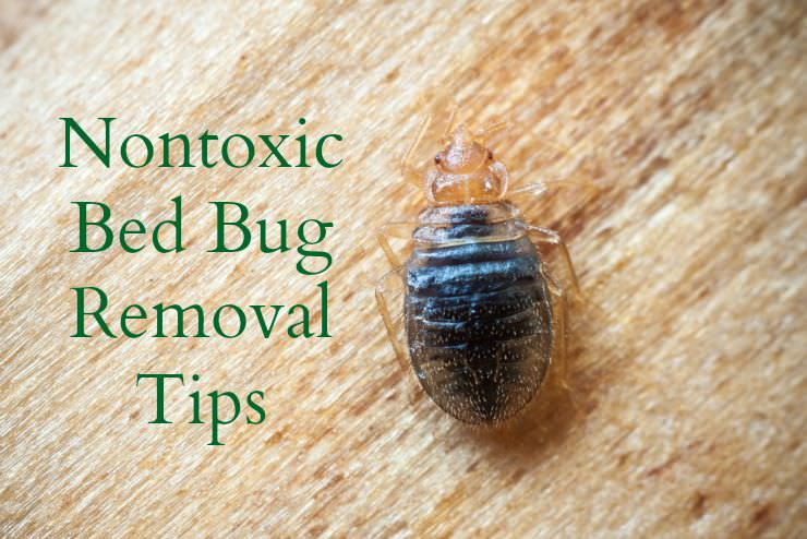 Get Rid of Bed Bugs Naturally and Effectively - Healthy Home Economist