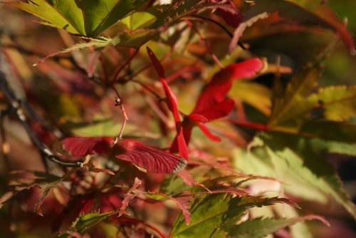 seattle arboretum, washington park arboretum, fall colors, music of trees