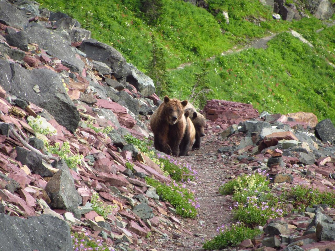 Glacier NP | Continental Divide Trail, 2012
