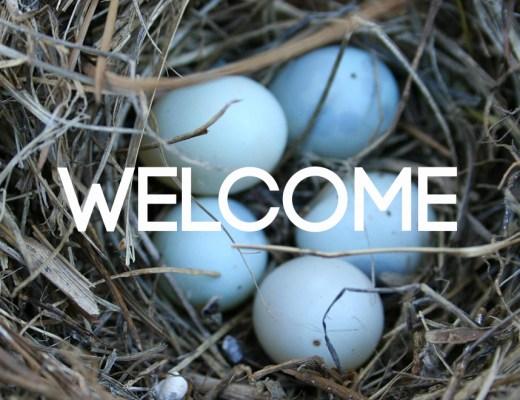 IMG_1267_Bluebird Eggs