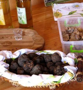 The Tasty Truffles of Istria