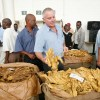 US$240m tobacco passes through auction floors