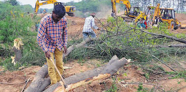 Locals cutting trees felled during the land-filling process at a Patiala village. (HT Photo)