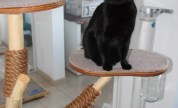 Pictures Of The Ings Luxury Cat Hotel Luxury Cattery Gallery