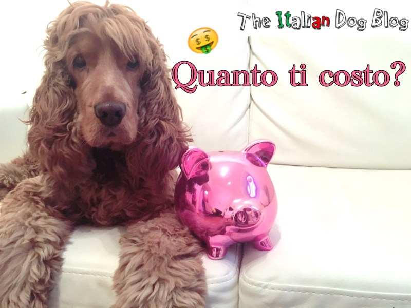 Quanto costa mantenere un cane the italian dog blog for Quanto costa abbaiare un mantello