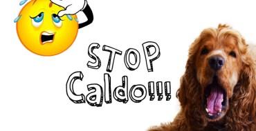 STOP Caldo