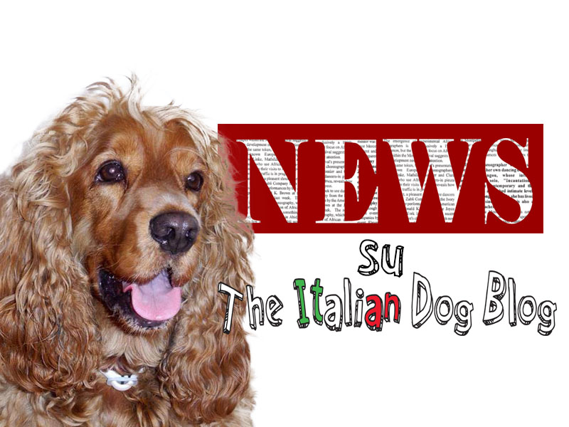 copertina-news