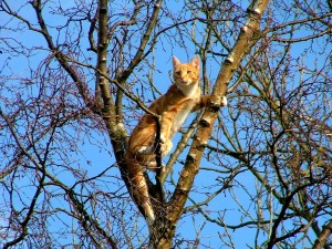 picture cat in tree
