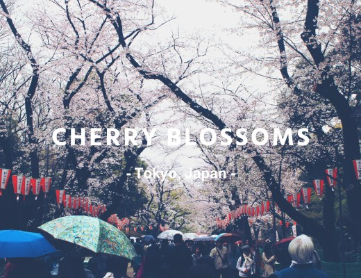 Cherry Blossoms 2016