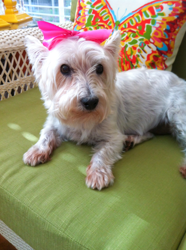 Muffy Mae's Thirteenth Birthday Portraits, July 16, 2012