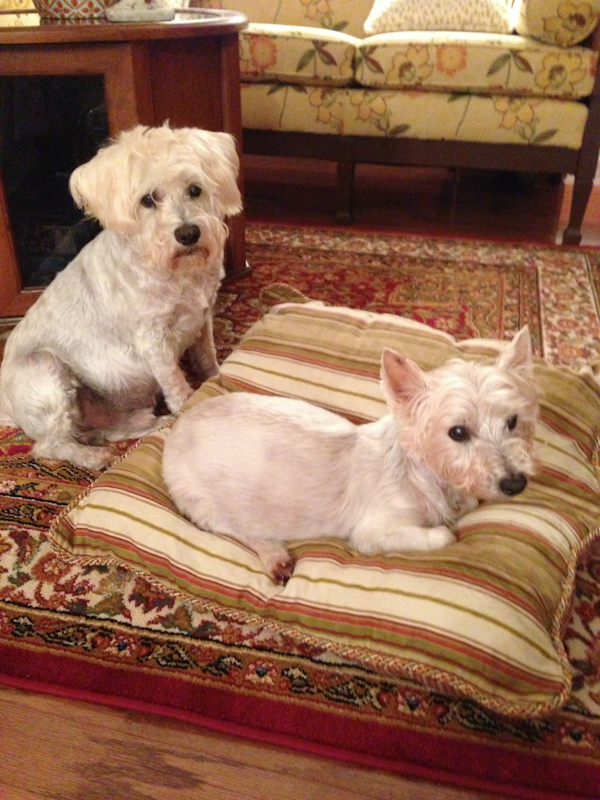 Bo and Muff's last photo together, March 26, 2013