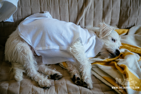 savannah made Albert a shirt to wear to the blessing of the animals. Albert wasn't so thrilled about trying it on six times along the way.