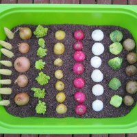 Farm Harvest Sensory Bin