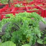 Kale Around The World: Berlin