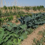 Spain: Local Harvest Ready for Sale in Murcia