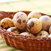 How to crack Quail eggs the easy way
