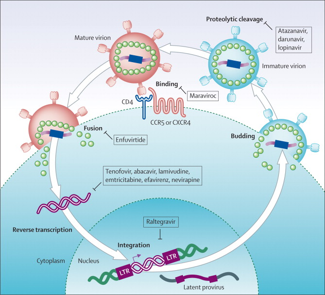 Antiretroviral therapy and management of HIV infection - The Lancet