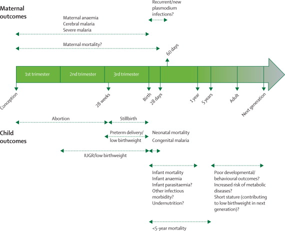 Epidemiology and burden of malaria in pregnancy - The Lancet