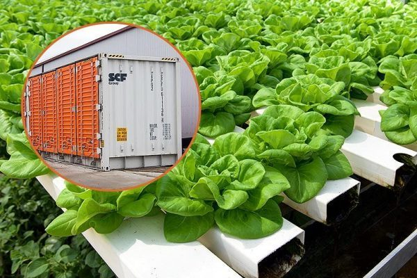 """Kimbal Musk's """"Urban Farming Accelerator"""" Grows 2 Acres of Food in a Single Shipping Container"""