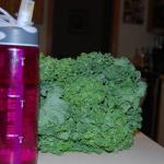 DSC 6915 150x150 Pick of the Week: Kale