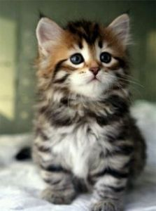 Trump makes me sad, so instead, I'm posting a kitty. Kitty-witty!
