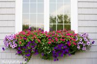 Window Box Tips