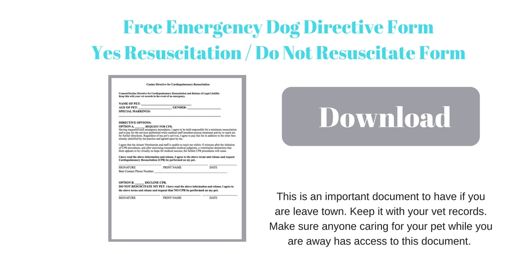 Emergency Pet Doc\u0027s Curtesy of the LDR - the LITTLE DOG RETREAT