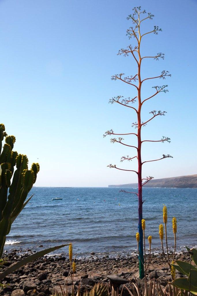 Playa-Quemada-Lanzarote-Spain-Spagna-Canarie-Canary-island-Photo-credit-by-Thelostavocado-(12)