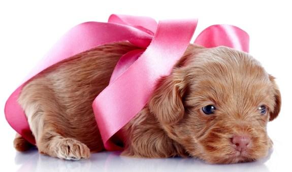 Mascotas teñidas de rosa