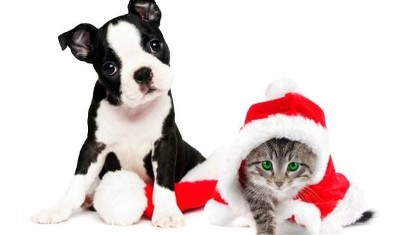 Navidad: mascotas en peligro