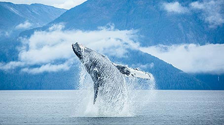 Hd Wallpaper For Windows 7 1080p Whale Theme For Windows 10 8 7